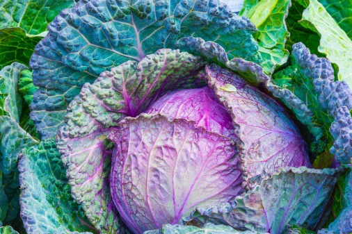Gemüse enthält viel Kalium
