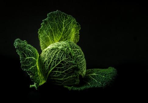 Kohlpflanzen sind dafür ein gutes Beispiel