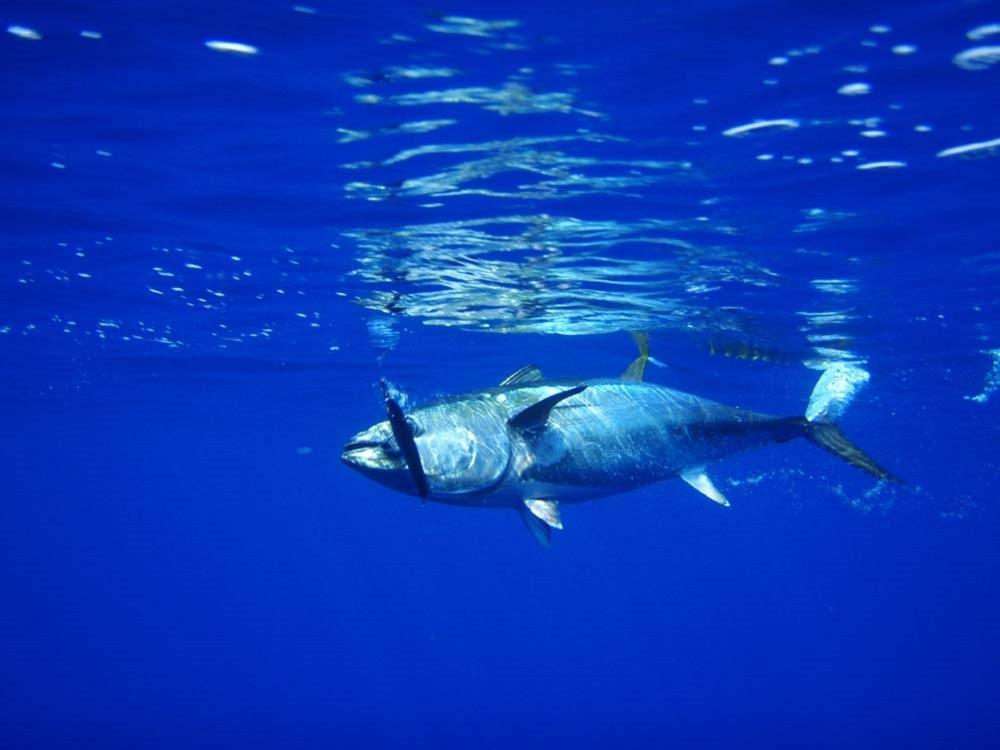 tuna-576938